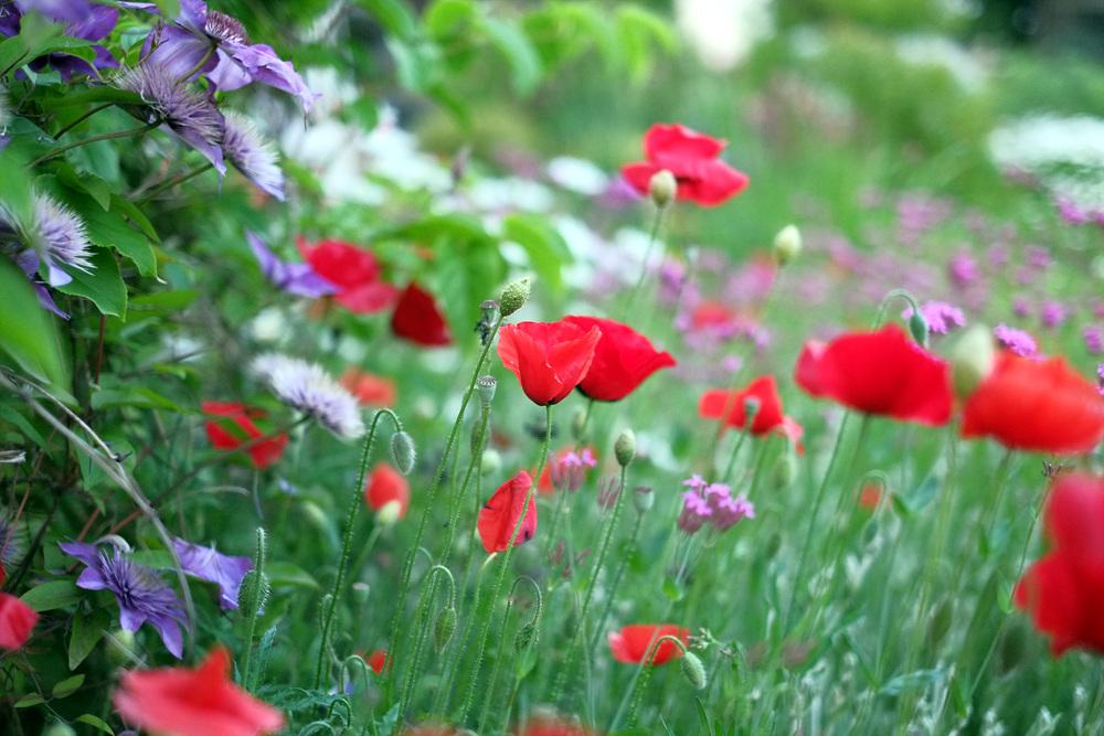 등대의집에 다양한 예쁜꽃들이 피기 시작했답니다.^^