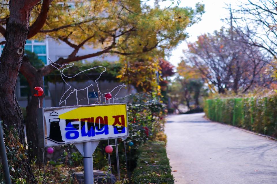 등대의집 가을풍경모습 담아보아요